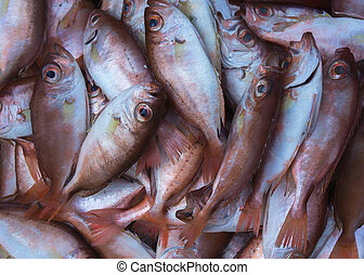 Close up of copper-colored fish caught in the South China...