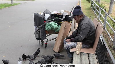 Hungry pigeons - Homeless man in ragged clothes throwing...