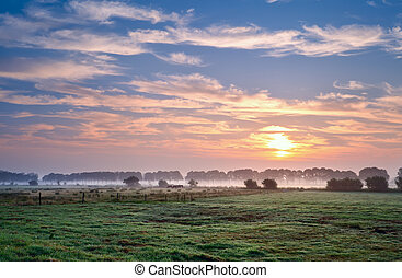 summer sunrise over pastoral - summer sunrise over Dutch...