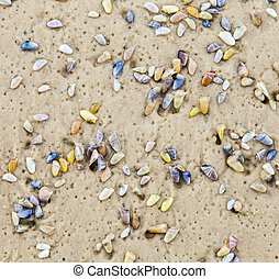 beautiful shells at the sandy beach give a harmonic...