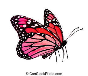 Red pink butterfly , isolated on white