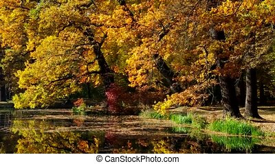 Oak tree in fall - Oak trees in fall