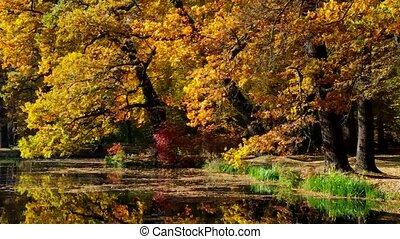 Oak tree in fall - Oak trees in fall