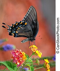 Butterfly - Swallowtail butterfly photographed from out...