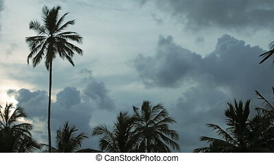 Evening landscape with palm trees