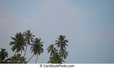 Group of tropical palm trees