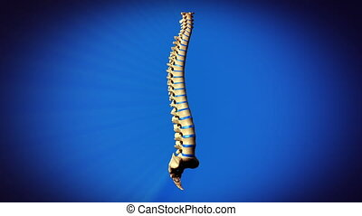 Vertebrae Spine - full rotation