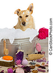 Cute terrier sitting in a bath full of bubbles - Cute little...