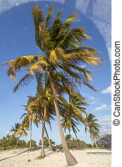 Palm trees moving in the wind