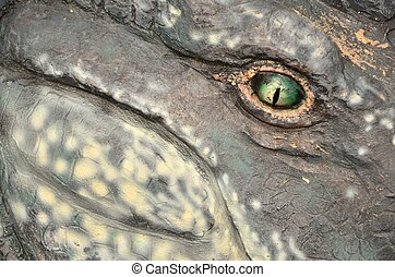 Eye contact - Watchful green eye of an outdoor reptile...