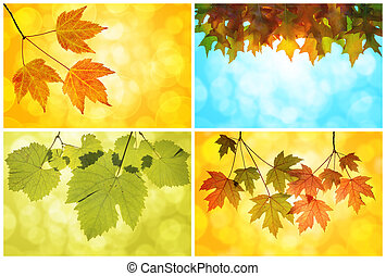 Fall Autumn Leaves Collage of Maple Tree Grape Vine and Oak...