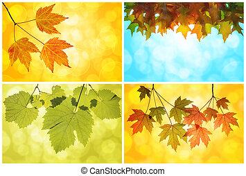 bukás, Ősz, zöld, kollázs