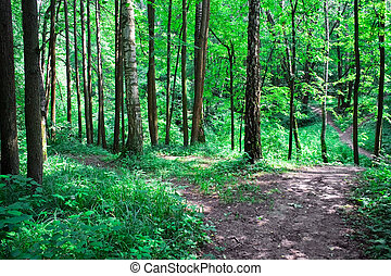 A road in Green forest - A road and a ravine in green forest...