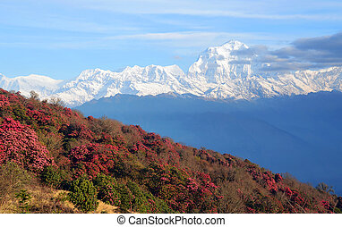 nepal - Nepal in the spring