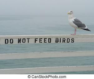 Do Not Feed Birds
