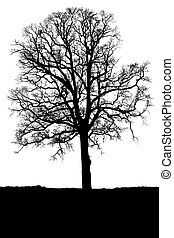 Oak tree without leaves against white background