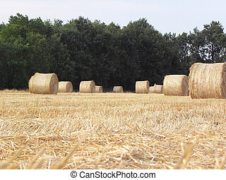 Straw bales of stubble.