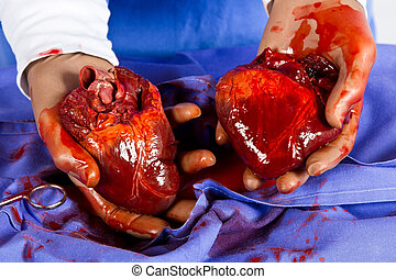 Doctor hold two hearts in blue with tools replacement