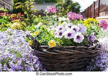 Flower basket - Wicker garden basket full of blooming...