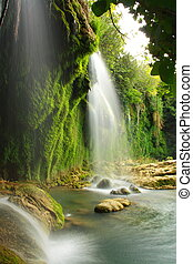water flowing on rocks - tree roots and water flowing on...