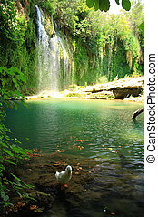 duck in stream with view of big waterfall - duck playing in...
