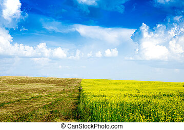 Peaceful rural landscape in wide field