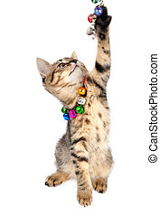 kitten with bells necklace playing - Little kitten with...