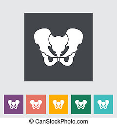 Pelvis - Anotomy Pelvis flat icon. Vector illustration.