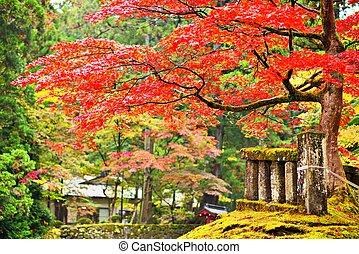 Foliage in Nikko - Autumn foliage in Nikko, Japan.