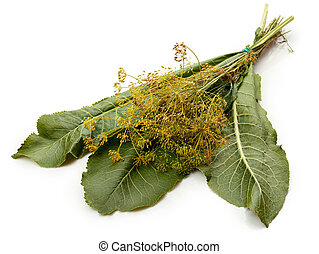 Horseradish leaves and flowers of dill on white background