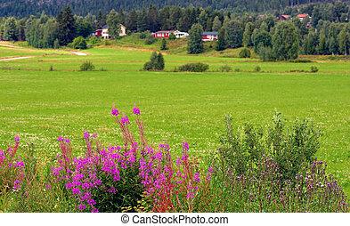 rurale, paesaggio, scandinavo