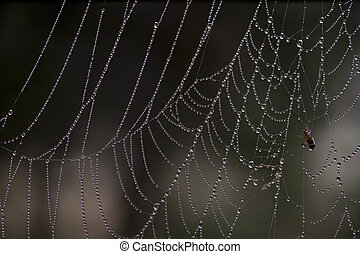 cobweb with morning dew and caught bug