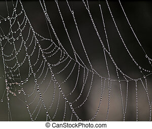 cobweb with morning dew on dark background