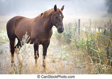 brown horse in field in early misty morning