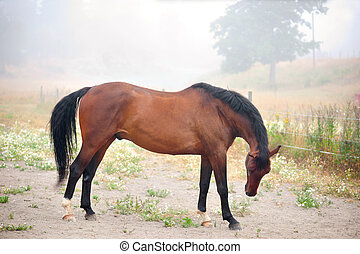 brown horse in early misty morning
