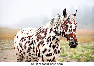 spotty horse - brown and white spotty horse in field on...