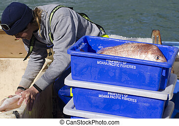 Fishing industry - MANGONUI, NZ - JULY 25:Fisherman puts...