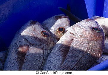 Snapper fish - Four fresh Snapper fish in a blue box and ice...