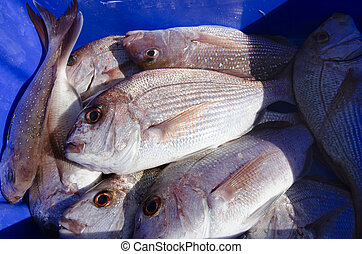 Snapper fish - Many fresh Snapper fish in a blue box and ice...