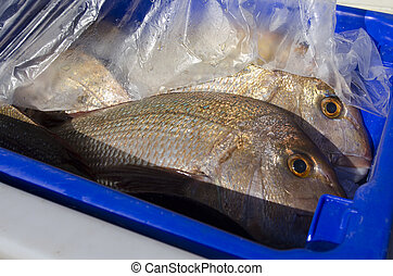 Snapper fish - Fresh Snapper fish cover in plastic in a blue...