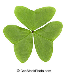 three leaf clover isolated on white