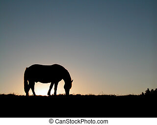 Horse Silhouette - Single horse silhouette over evening sky...
