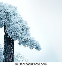 frost covered pine