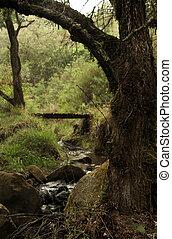 Enchanting River Scene