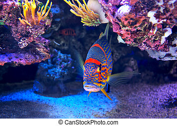 Colorful fish on the bottom. - Exotic colorful fish among...