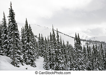 Snow covered trees. - Snow covered trees on side of...