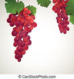 Vector Wine Grapes with Leaves