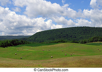 Rolling Landscape - Rolling green hills in the countryside...