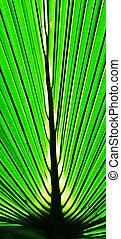 Emerald Passage - Macro photo of a palm