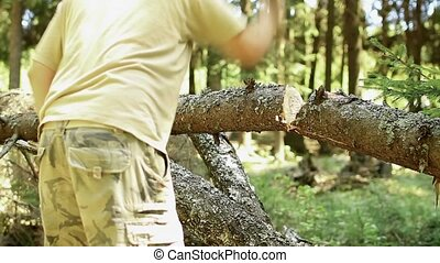 Woodcutter at work in the forest